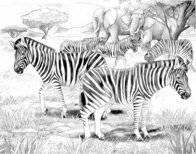 Poster Safari - zebras - página da coloração