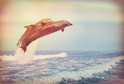 Poster Salto golfinhos, instagram