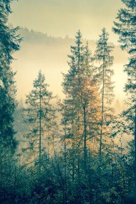 Poster Selvagem da floresta em tempo estação outonal, estilo do vintage tonificado