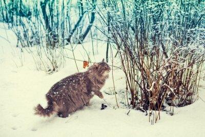Poster Siberian, gato, andar, nevado, floresta