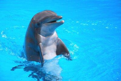 Poster Śmiejący się w delfin Loro Parque na Teneryfie