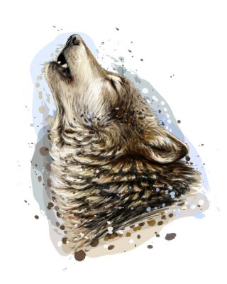 Poster The wolf howls. Sketchy, graphical, color portrait of a wolf head on a white background with splashes of watercolor.