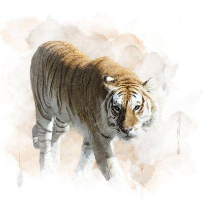 Poster Tiger Andando