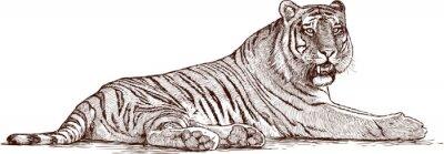Poster tigre deitado