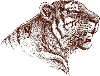 Poster tigre rujir