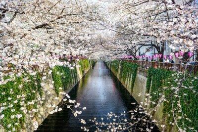 Poster Tóquio, Japão em Meguro canal na primavera.
