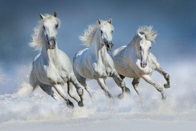 Poster Três, branca, cavalo, corrida, galope, neve