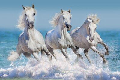 Poster Três, branca, cavalo, corrida, galope, ondas, oceânicos