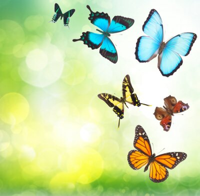 Poster Tropical, borboletas, jardim