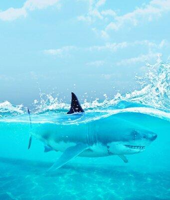 Poster Tubarão debaixo d'água, ilustração 3d