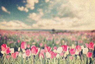 Poster Tulipas, flores, prado, vindima