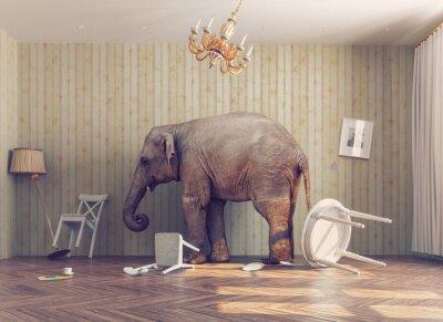 Poster Um elefante em um quarto