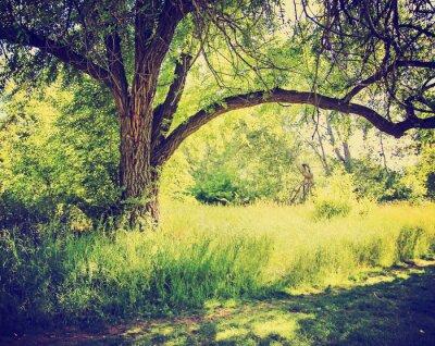 Poster uma floresta ou parque com árvores com folhas de outono feito com um ret