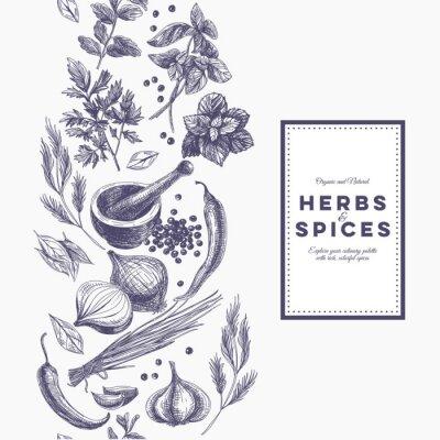 Poster Vector o fundo com as ervas e as especiarias desenhadas mão.
