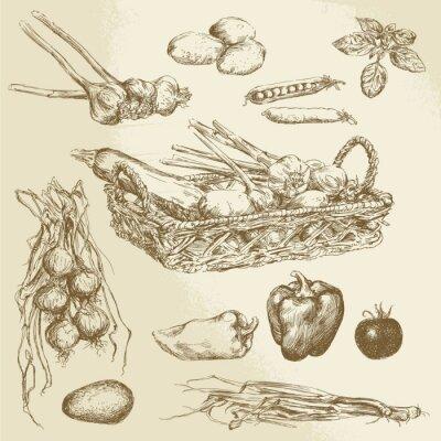 Poster vegetais - coleção desenhada