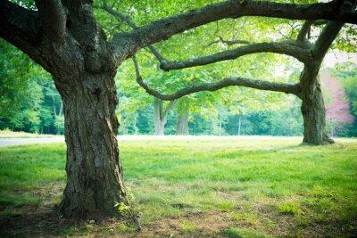 Poster Verão árvores encantadoras e grama no ajuste do parque