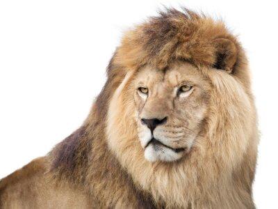 Poster Vigilante poderoso leão