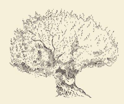 Poster Vindima, azeitona, fundo, mão, desenhado, Ilustração