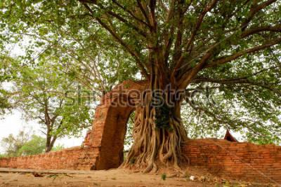 Poster Wat Phra Ngam (abandonado) Ayutthaya Gate of Time O arco é cercado pelo pho.