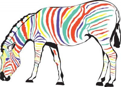 Poster Zebra Kolorowa