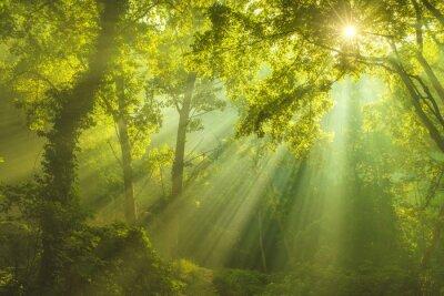 Quadro A Floresta do Céu