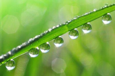 Quadro A grama fresca com gotas de orvalho fecha-se