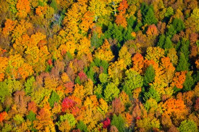 Quadro Aerial view of fall foliage in Vermont.