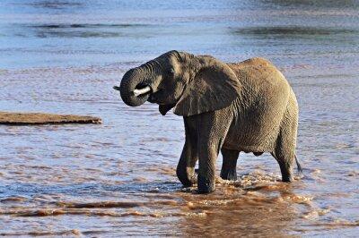 Quadro Africano, elefantes, savana