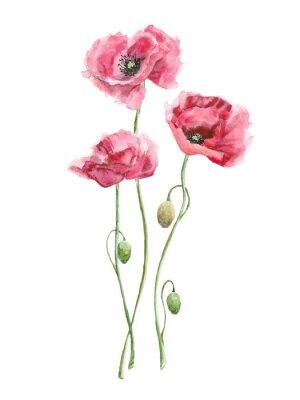 Quadro aguarela flores vermelhas (papoulas)