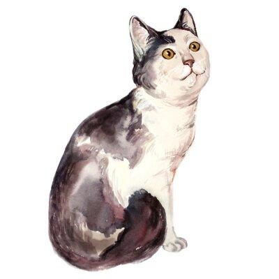 Quadro Aguarela, Ilustração, feio, gato, olhar, confuso