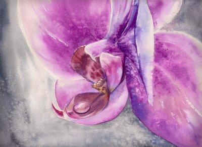 Quadro Aguarela que ofega da flor cor-de-rosa da orquídea com gota pequena da água.