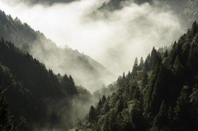 Quadro Alto, montanha, névoa, nuvem