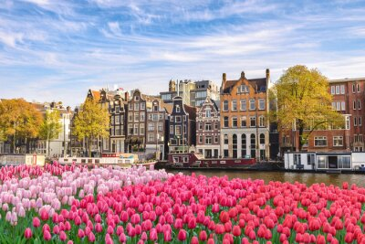 Quadro Amsterdam Netherlands, city skyline Dutch house at canal waterfront with spring tulip flower