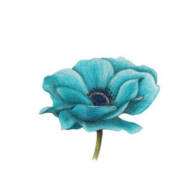 Quadro Anemone azul