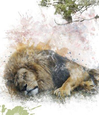 Quadro Aquarela Imagem De Leão do sono