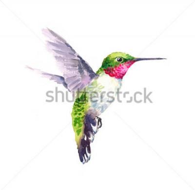 Quadro Aquarela pássaro beija-flor de açúcar branco quente