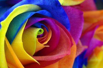 Quadro Arco-íris rosa ou flor feliz