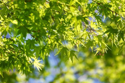 Quadro Árvore da mola