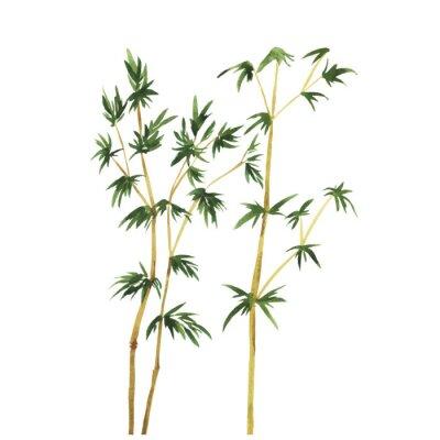 Quadro Árvores de bambu selvagens abstratas no fundo branco. Entregue a ilustração tirada do vetor da aguarela.