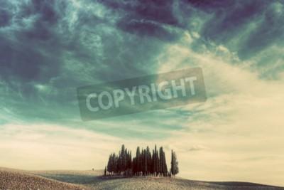 Quadro Árvores de Cypress no campo em Toscânia, Italy no por do sol. Paisagem toscana no vintage, humor retro