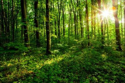 Quadro árvores de floresta