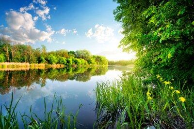 Quadro Árvores por rio calmo