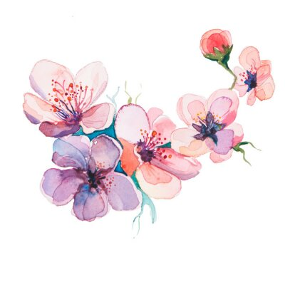 Quadro As aguarelas flores da primavera isolado no fundo branco