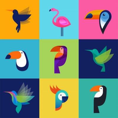 Quadro Aves tropicais - conjunto de ícones do vetor