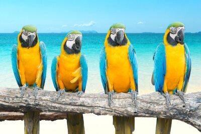 Quadro Azul, ouro, arara, tropicais, bonito, praia, mar