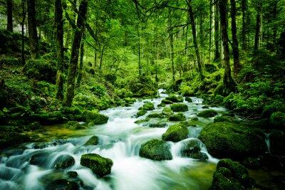 Quadro Bach im Wald