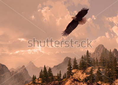 Quadro Bald eagle soaring in the Rocky Mountain high country.