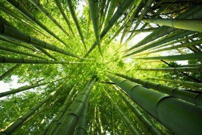 Quadro Bambu verde natureza fundos