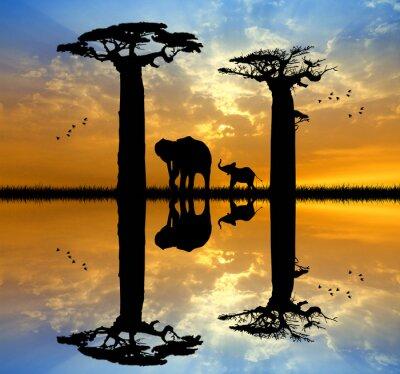 Quadro Baobab e elefante no por do sol