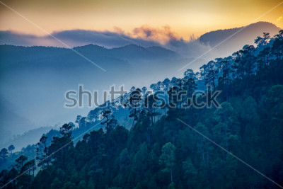 Quadro Beautiful view of Foggy pine forest and sunrise at himalaya range, Almora, Ranikhet, Uttarakhand, India.